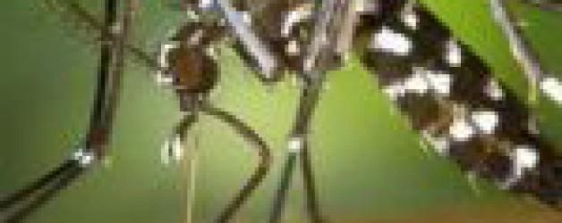 Cas de dengue à Solliès-Pont: en quoi consiste la démoustication?